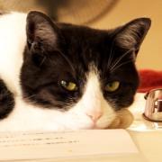 H&A企画室の猫と庭