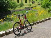 自転車で通勤してみよか!
