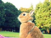 世田谷のどんくさウサギ『タックン』公式ブログ