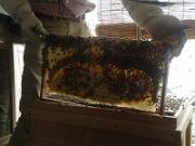 日本蜜蜂ベランダ養蜂日記