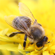 初心者の養蜂記録