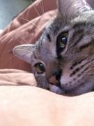 名はとらじろう。通称、猫のトラちゃんです。