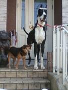 小さなアニキ犬と大きな弟犬のナイショ話