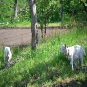 自然豊かな田舎暮らし