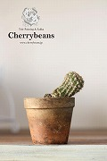 Cherrybeans Staff Blog