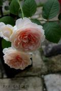 R Small Garden