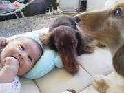 ☆wan&baby☆-2ワンとベビの日々-