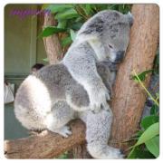 mqueen の オーストラリア life