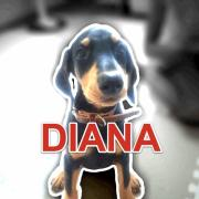 DIANA IS FAMILY