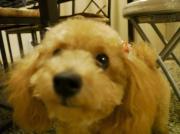 けいぴょんのオフィシャルブログ