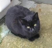 くろ猫クローディアのブログ