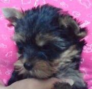OZ の犬ブログ