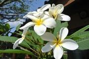くいしんぼうKAZの海外生活ブログ(カナダ&バリ)
