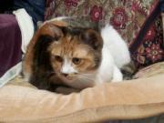 猫の家アルジ