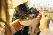 猫バカとバカ猫の本日もひとしきり!