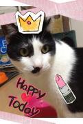 猫クサイ人のブログ