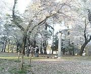大宮公園〜花見・桜・動物園〜