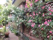 My Garden.My Life