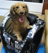愛犬リボンとハーレーとキャンプ