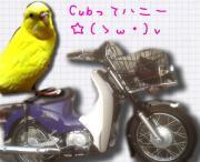 Cubってハニー☆(ゝω・)v