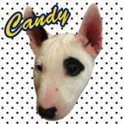 MY NAME IS CANDY.