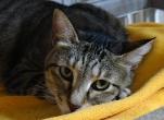 猫好き旦那の地域猫対策ブログ