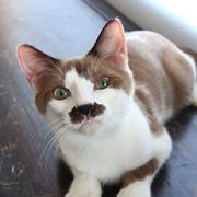 猫カフェ『猫まるカフェ OKINAWA』スタッフブログ
