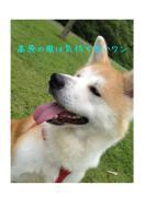 秋田犬コマチと家族