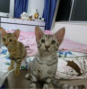 マイとネコたちの世に棲む日日