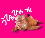 yuki,,U・×・Uさんのプロフィール