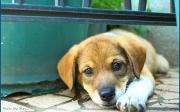 かわいいやつめ! ココ太朗犬
