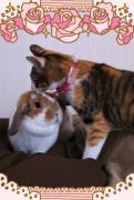 ネコ&ウサギの三姉妹のブログ