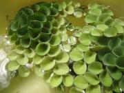 熱帯魚ベタの飼育にチャレンジ!