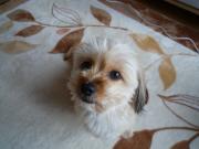 MIX犬ちゃこのブログ