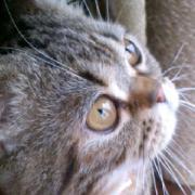 幸福猫の雑記