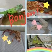 爬虫類ってかわいい☆