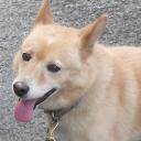 駄犬キイ公式ブログ