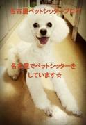ペットシッターハッピーテイル名古屋千種店