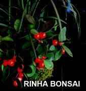 bonsai life −盆栽のある暮らし−