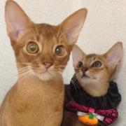 ネコとヒトの観察日記