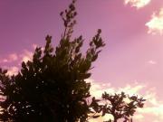 着物リメイク 月桂樹
