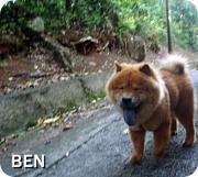 BEN 浪花のチャウチャウ犬