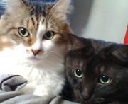 ニャンコと私のグダグダブログ
