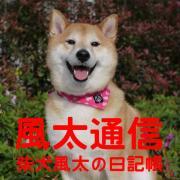 風太通信〜柴犬風太の日記帳