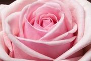 Rose garden ー素敵なローズガーデンの作り方ー
