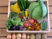 無農薬野菜屋feel