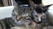 荒川区地域猫ボランティア団体 にゃーごのブログ