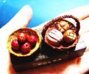 Miniature Polka ミニチュアポルカ