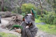 長野で暮らすコアラのはなし