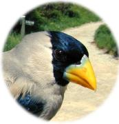 BIRD READERさんのプロフィール